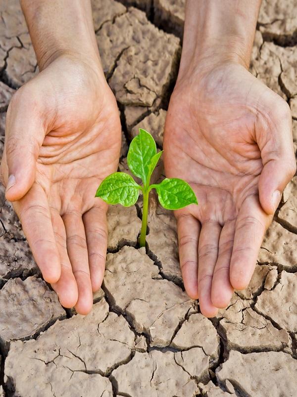 Aragón busca una gran alianza para luchar contra el cambio climático