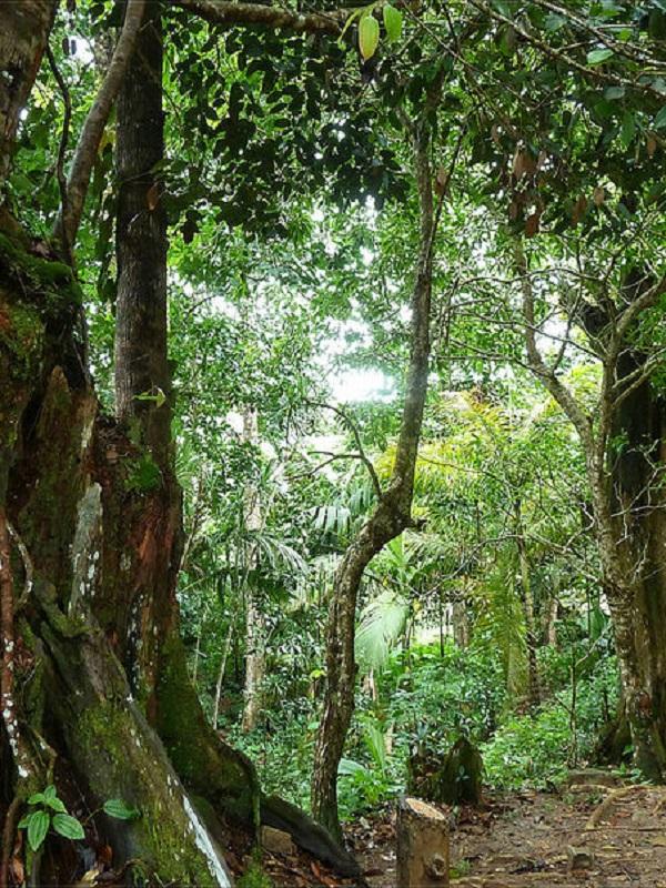 Día Internacional de los Bosque y ANSE