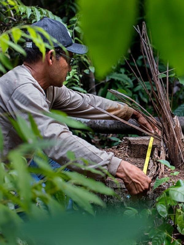Día Internacional de los Bosques 2018
