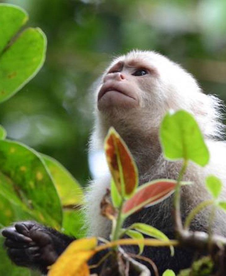 IPBES: las guardianas de la biodiversidad mundial