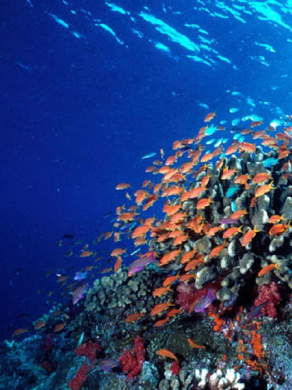 Las grandes profundidades de los océanos alargan la vida de las especies marinas