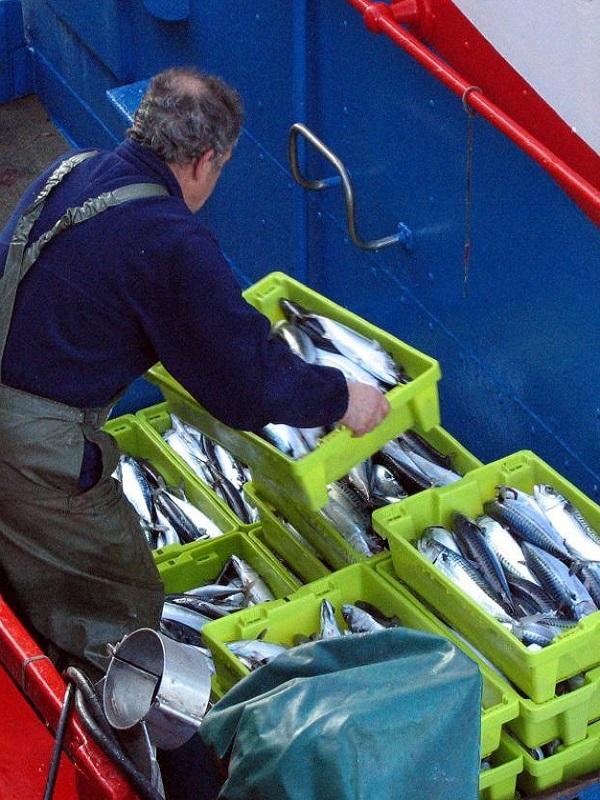 Desarrollo sostenible de la industria pesquera en el Cantábrico Noroeste