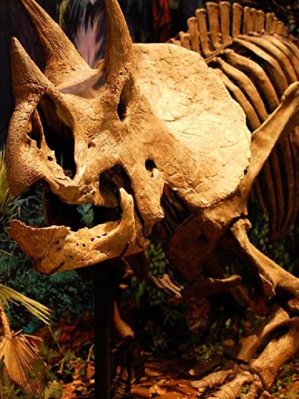 Los cuernos en dinosaurios evolucionaron para buscar pareja
