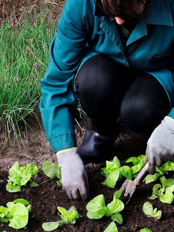 El Cantabria impulsará la producción ecológica