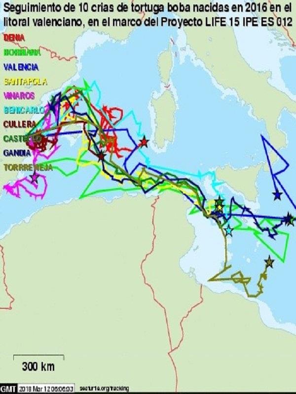 Seguimiento de las tortugas marcadas con satélite que recorren el Mediterráneo