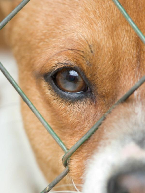 Asturias y la aplicación del Convenio Europeo sobre Protección de animales de compañía