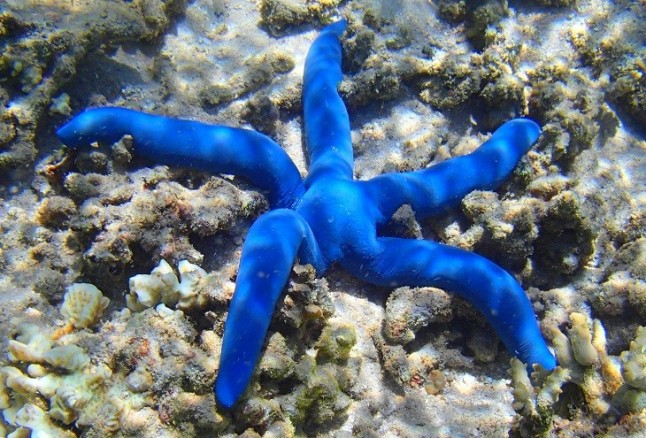 Especies del mar profundo al limite