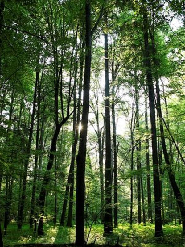 El Parque Natural del Señorío de Bertiz celebra el Día Mundial de los Bosques