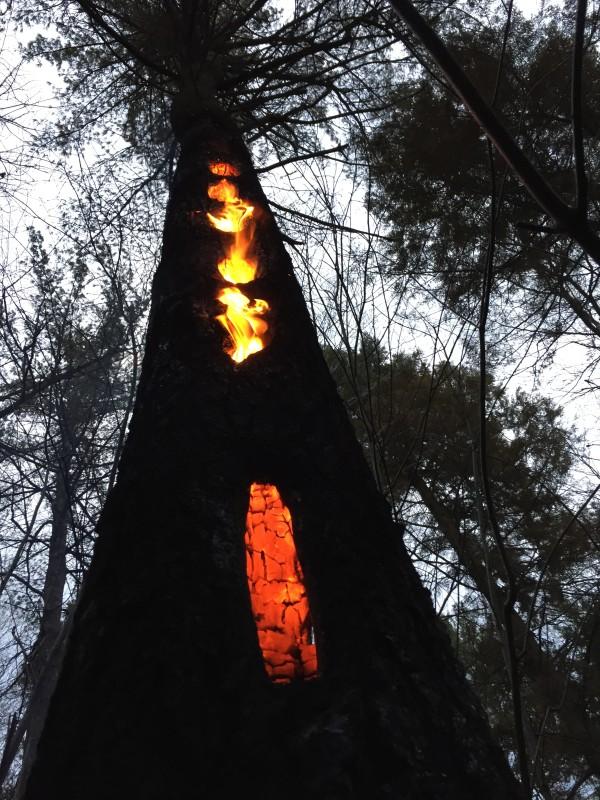 Vigo prepara un plan para protegerse de incendios forestales