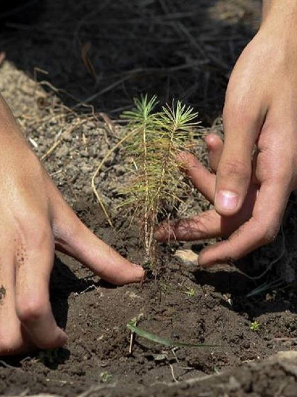 Funerarias de Zimbabue aprovechan las costumbres para luchar contra la deforestación