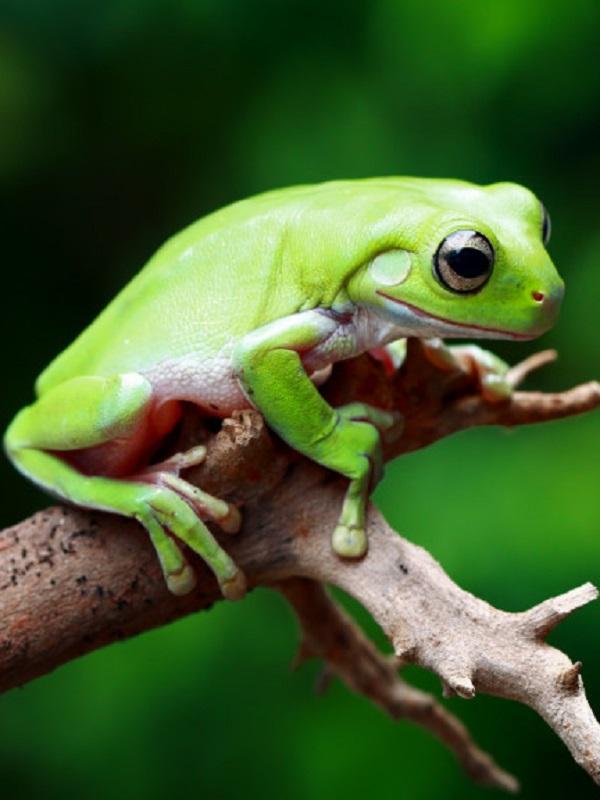 Tecnología verde, el canto de rana y el cambio climático