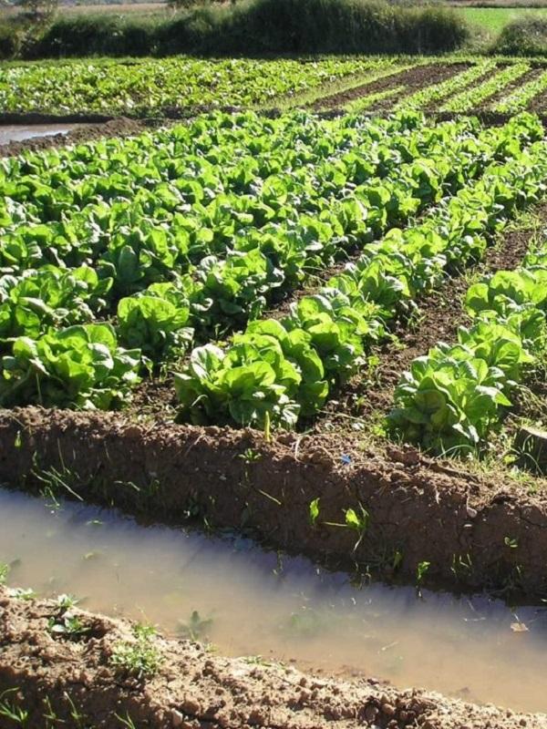 Asturias participa en una investigación internacional para mejorar la competitividad del cultivo ecológico