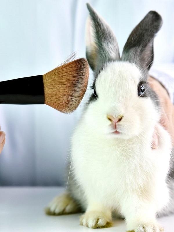 La vomitiva experimentación cosmética en animales tiene los días contados