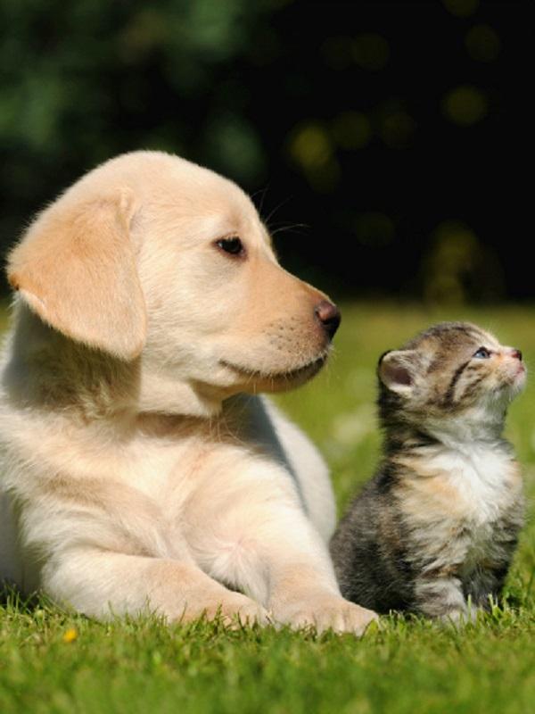 Granada arranca una campaña entre escolares para concienciarlos del cuidado y bienestar de animales de compañía