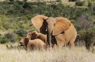 Reinventándose para proteger a los elefantes de la caza furtiva