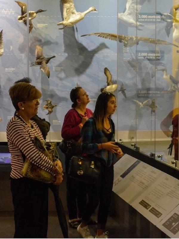 Museo de las Aves de México, 25 años de cultura y conservación
