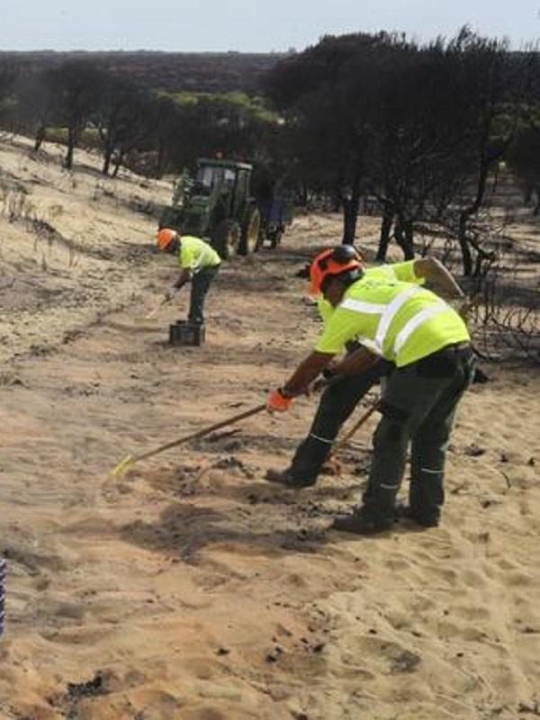 Restaurando la zona incendiada de Doñana