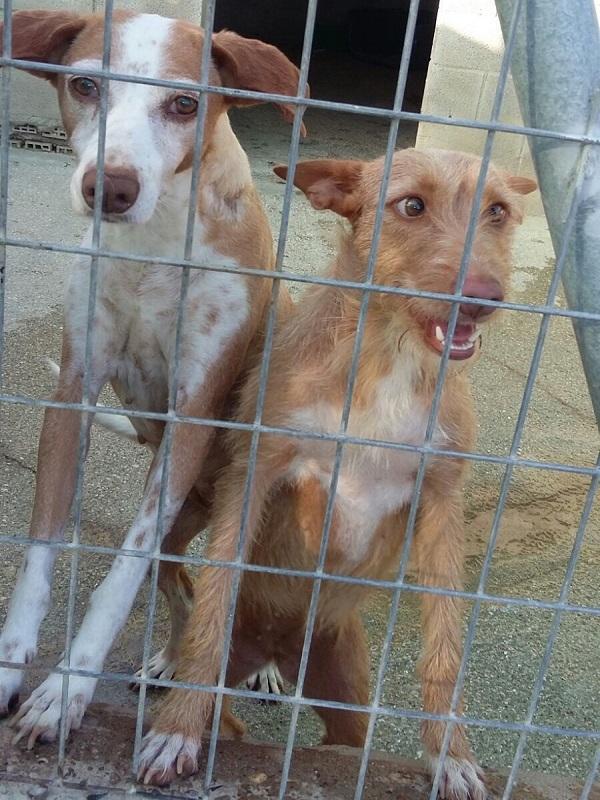 Campaña Soy Responsable contra el abandono y la cría ilegal de animales de compañía