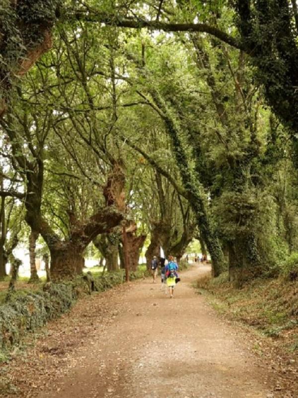 Medio Ambiente divulga los itinerarios de más de 130 Caminos Naturales