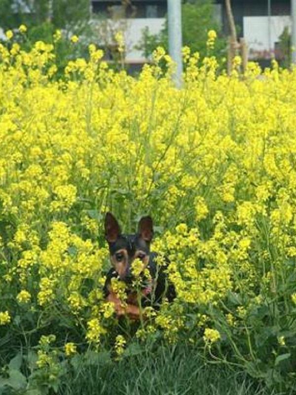 Abandono total de la zona de ocio de perros de Vitoria