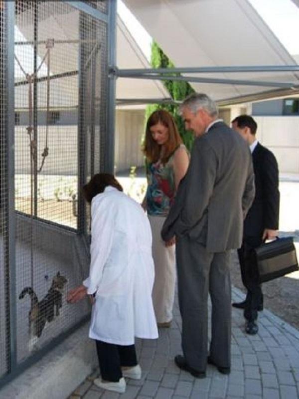 El Centro de Protección Animal de Madrid estrena pabellón para aves de corral, conejos, peces y pequeños roedores