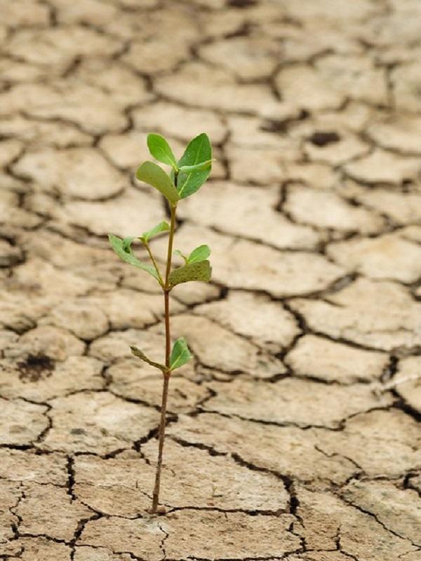 Jóvenes emprendedores asturianos buscarán soluciones al cambio climático