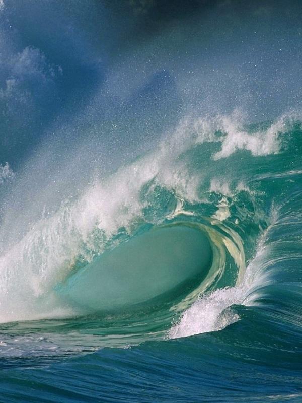 ¿Qué es el ruido oceánico y cómo afecta a los animales marinos?