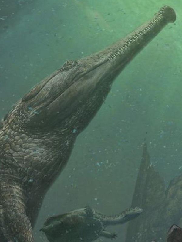 Cocodrilos se hicieron pasar por delfines hace 180 millones de años