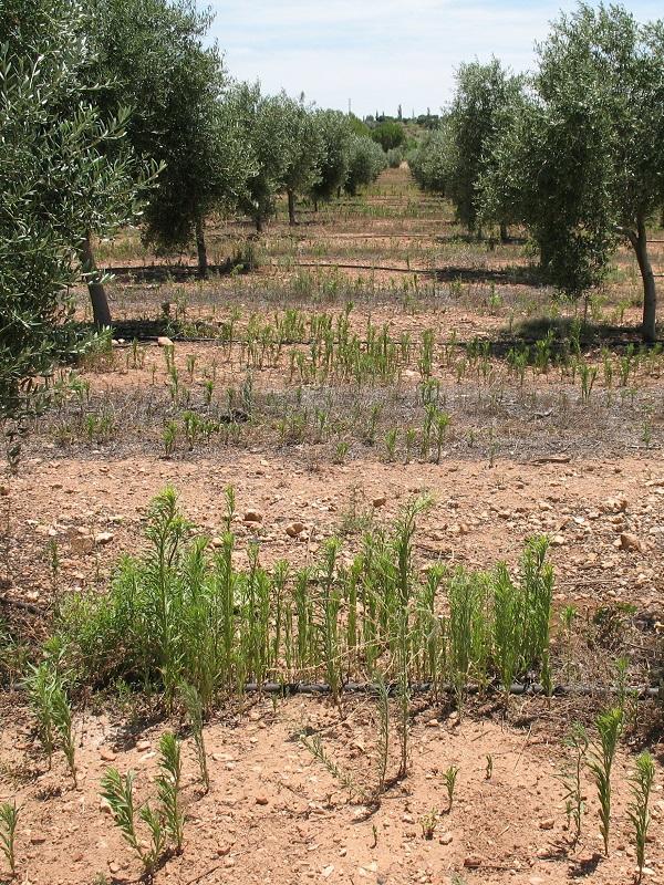 Publicación sobre malas hierbas en Navarra