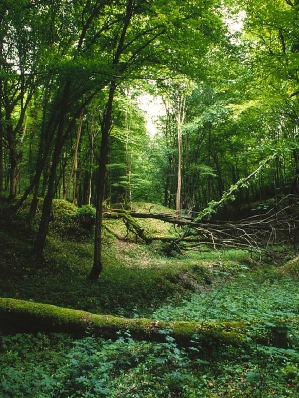 Sorprendente y constante expansión de los bosques