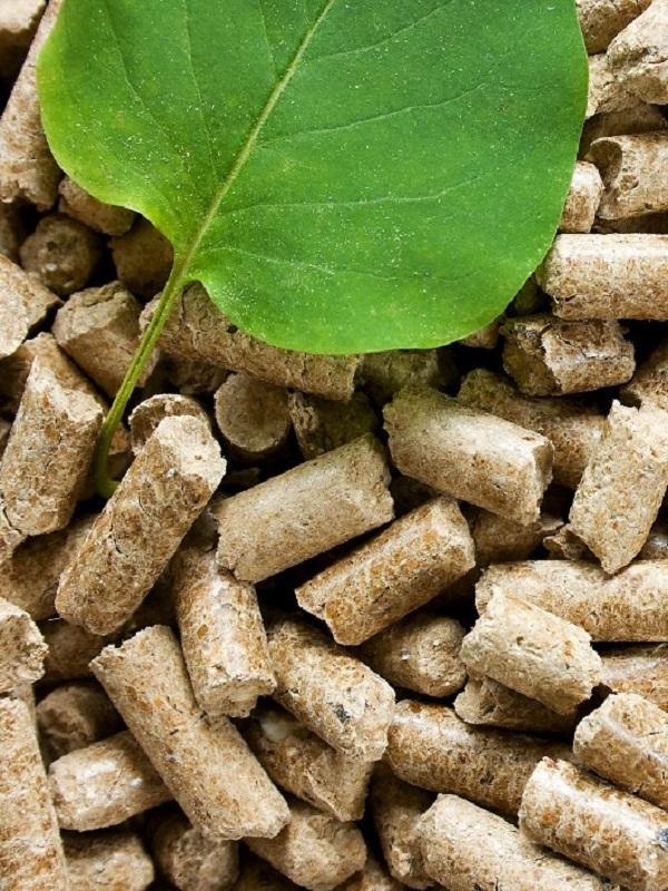 El Departamento de Biomasa de CENER asesora la Iniciativa Europea Vanguard