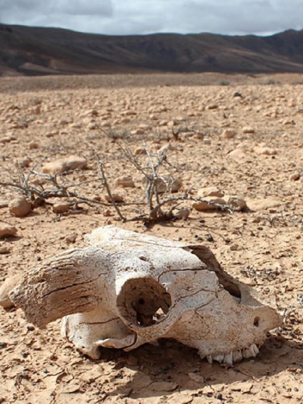 La sexta extinción masiva de especies