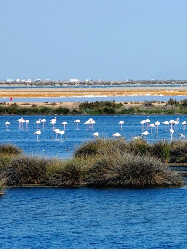 El Rocío debe ser escrupulosamente respetuoso con la conservación de Doñana (Huelva)