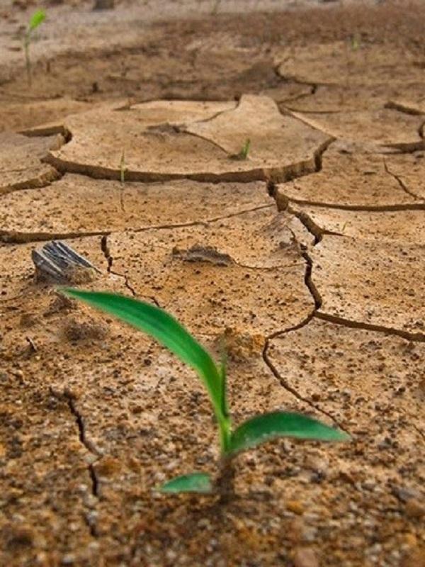 Gran Canaria, jornadas para concienciar sobre el cambio climático