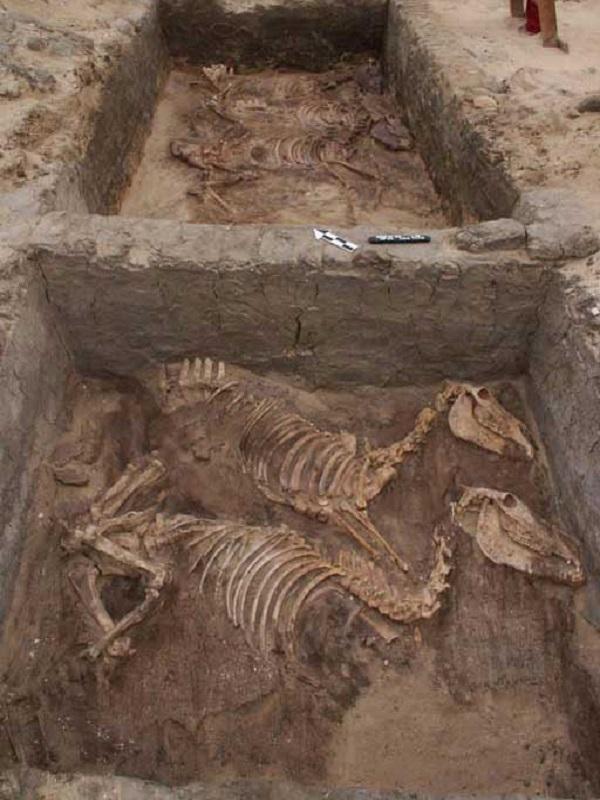 Evidencia arqueológica de domesticación del burro hace 4.700 años