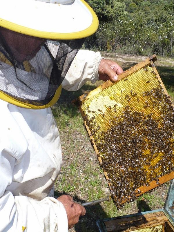Andalucía dará ayudas para mejorar los productos apícolas