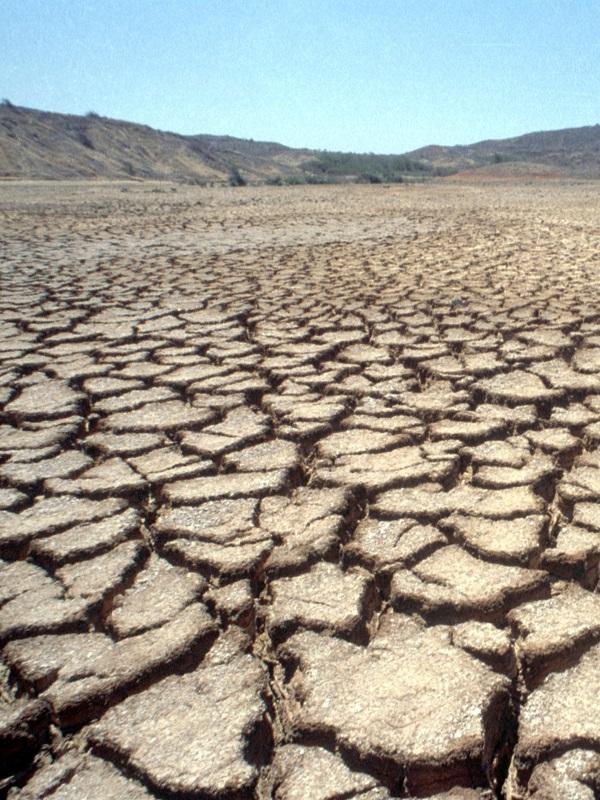 Endesa se pone las pilas ante el cambio climático