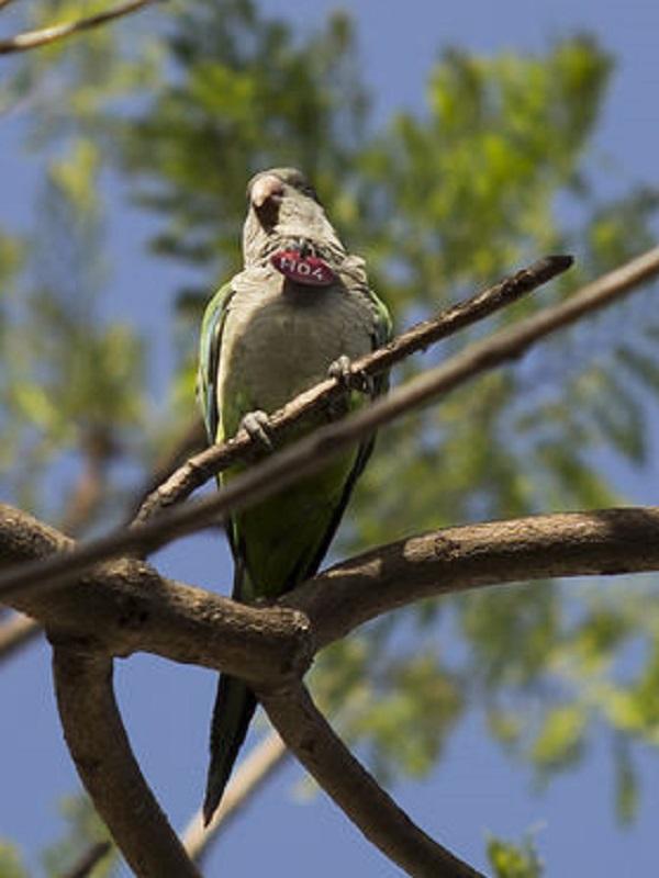 En Sevilla se desata la polémica por los nidos anticotorras
