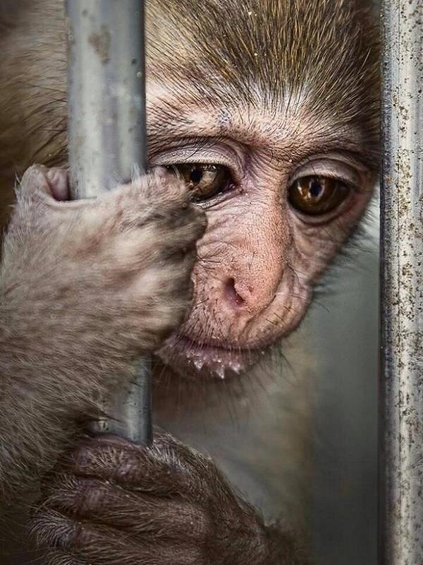 La poca vergüenza de Podemos y Ciudadanos al catalogar a los zoológicos como Espectáculos Culturales