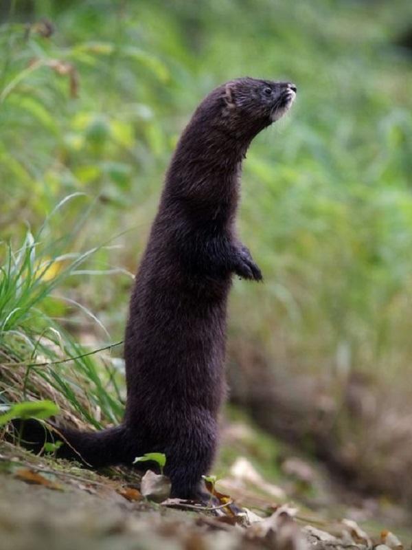 STOP a la Ley de Patrimonio Natural