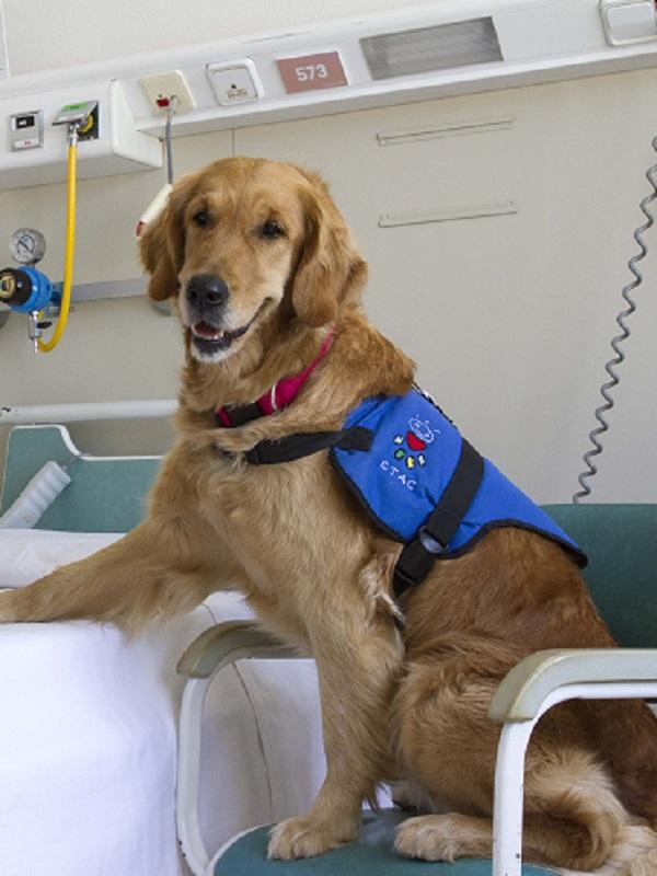 Los infinitos beneficios de las terapias con perros en adolescentes tutelados