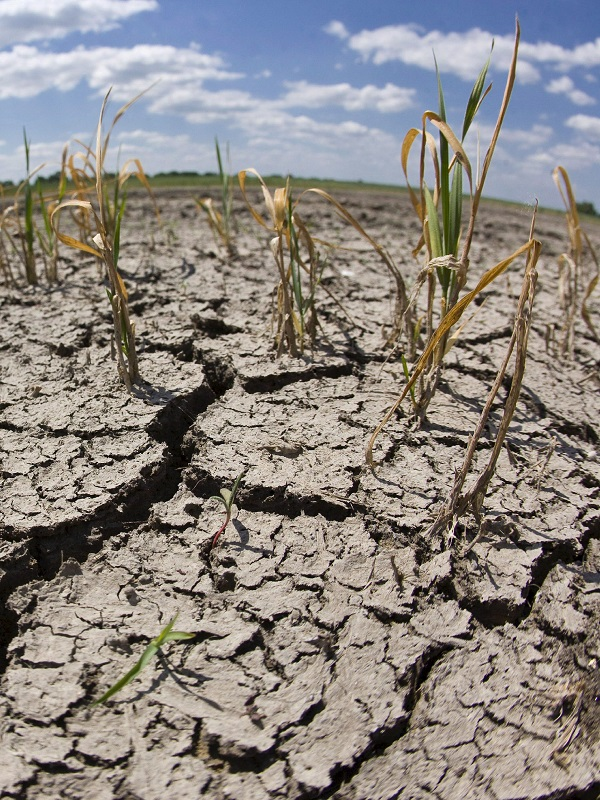 La paradoja de que el cambio climático puede incrementar la tierra cultivable