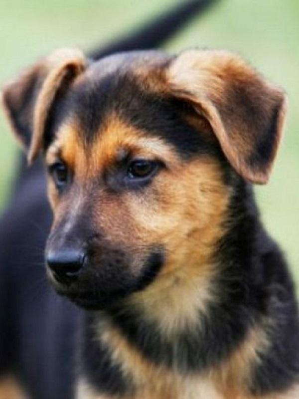 Tres de cada siete perros de los hogares españoles no son de raza