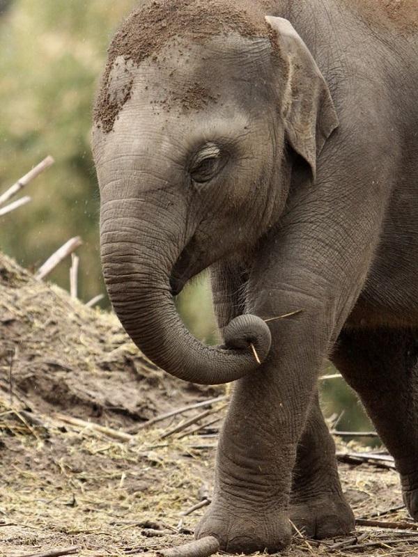 El drama de los elefantes huérfanos por la caza furtiva