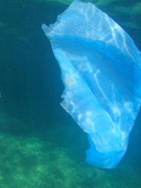 Plásticos de un solo uso: nuevas normas de Europa para reducir la basura marina