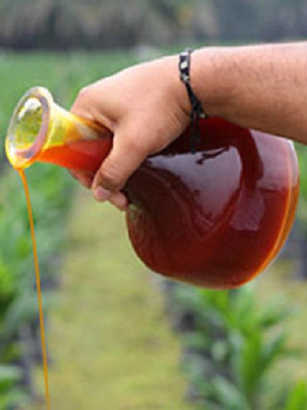 Unidos Podemos pon en Tela de Juicio el uso del aceite de palma como biocombustible en España
