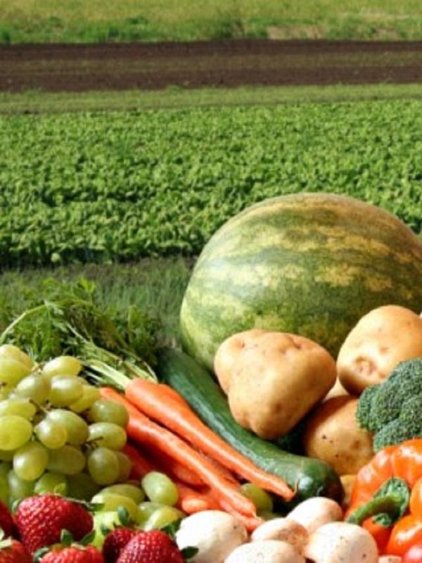Medio Ambiente organiza dos Jornadas sobre alimentos ecológicos