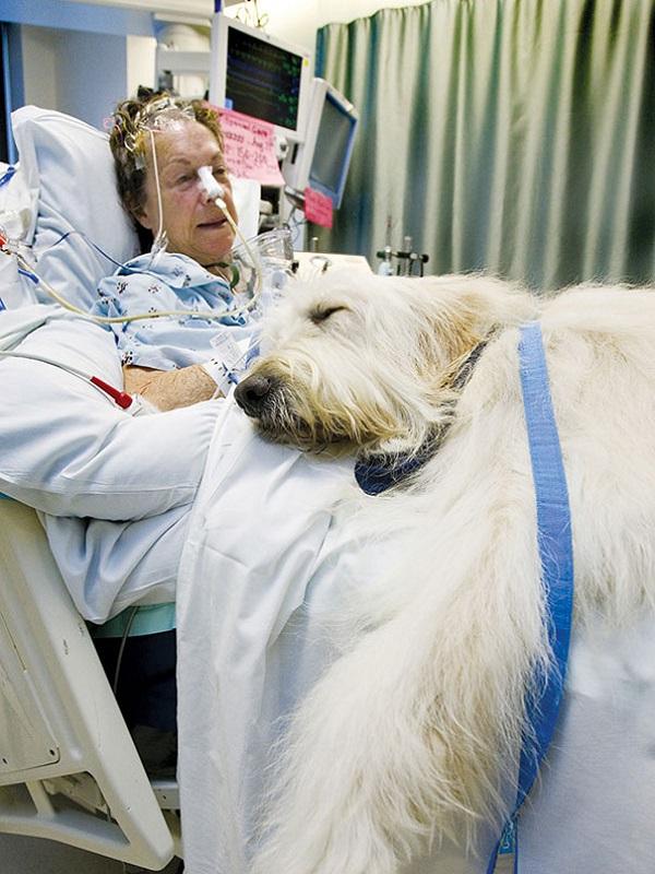 Pacientes de Ribera Salud podrán recibir la visita de sus mascotas