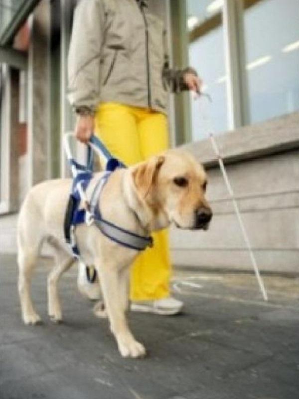 Novedades en la nueva ley andaluza reguladora de los perros de asistencia a personas con discapacidad
