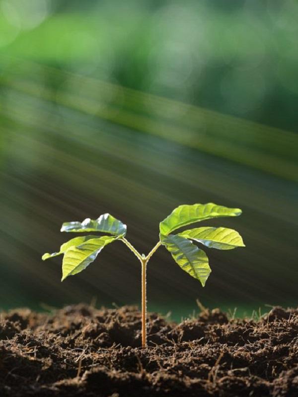 La nueva legislación sobre contratación pública con el medio ambiente